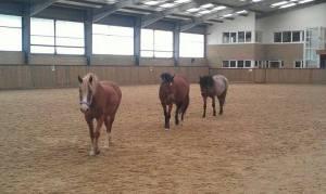 leadchange 3 horses